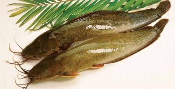 Nằm mơ thấy cá trê đánh đề con gì chắc ăn nhất?
