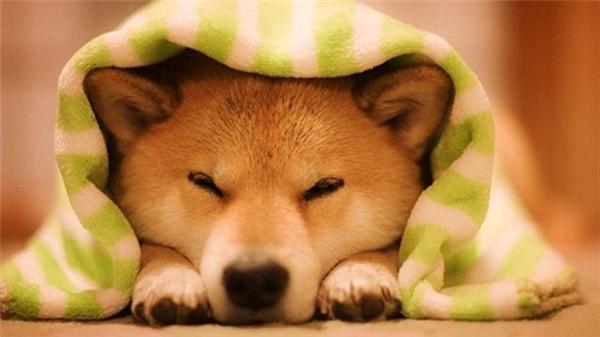 Mơ thấy chó đánh con đề nào là chuẩn xác