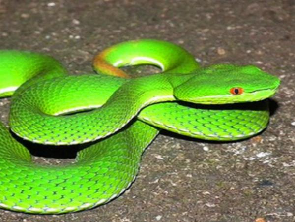 Nằm mơ thấy rắn có ý nghĩa gì với việc chơi xổ số