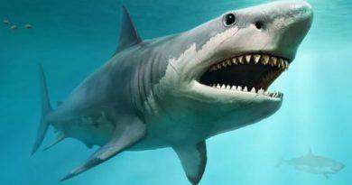 Nằm mơ thấy cá mập đánh xổ số con gì đây .