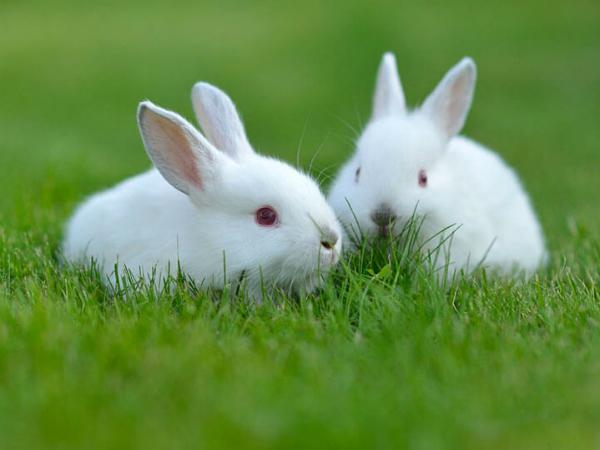 Nằm mơ thấy thỏ con có ý nghĩa gì chơi xổ số con gì may mắn