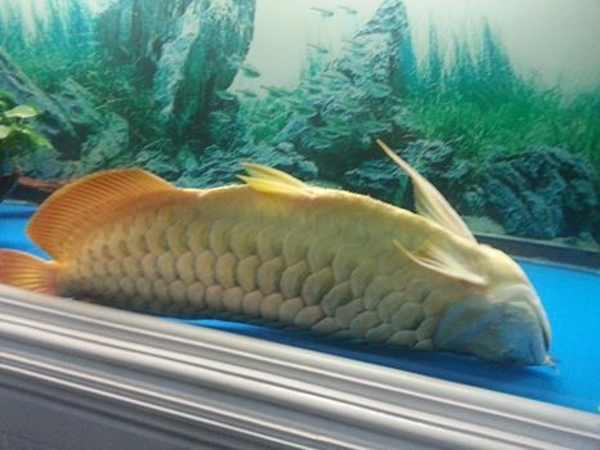Giải mã các điềm báo liên quan đến việc cá chết