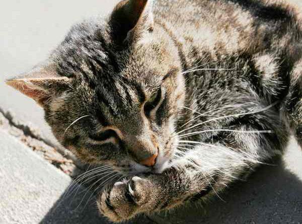 Mèo vào nhà là điềm báo gì, nên đánh số nào?