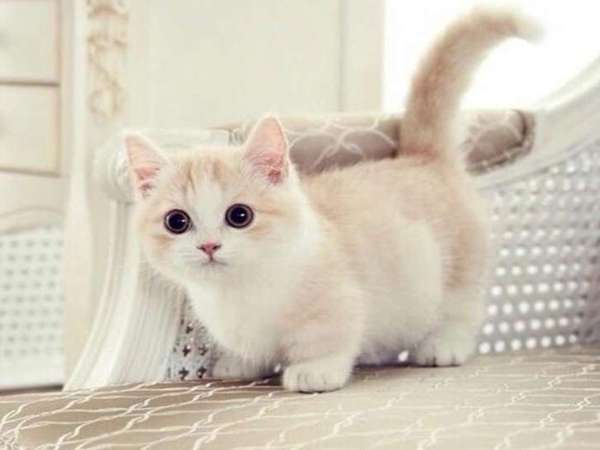 Mơ thấy mèo báo hiệu điều gì