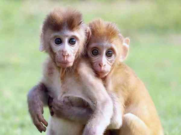 Mơ thấy con khỉ là điềm báo gì