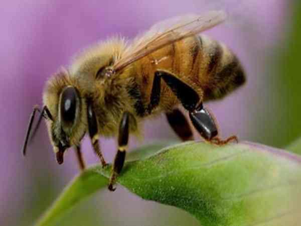Mơ thấy con ong