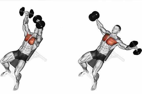 Bài tập cơ ngực Incline Dumbbell Fly