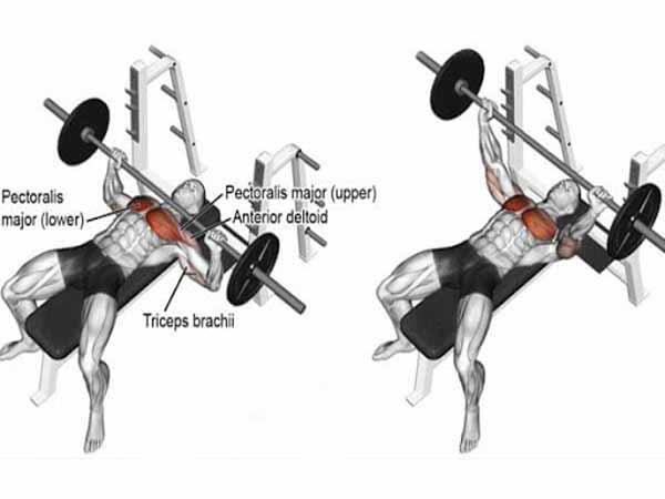 Bài tập cơ ngực Barbell Bench Press
